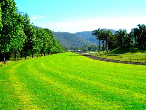 Muskoka Farm horse training track