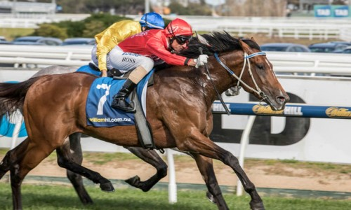 Gold Symphony wins the Group 3 Vein Stakes