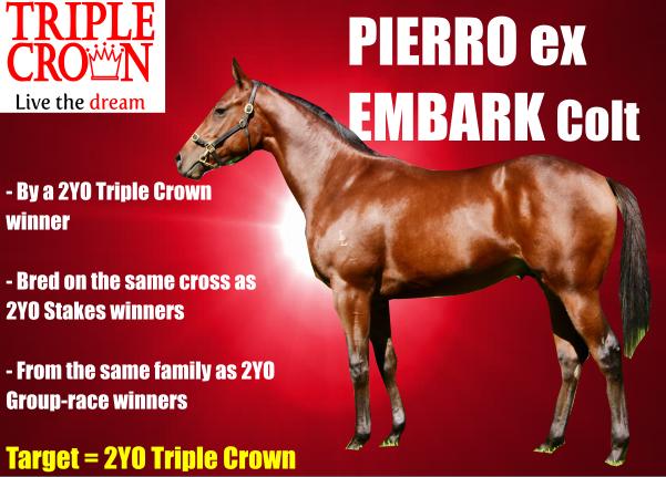 pierro-ex-embark-banner