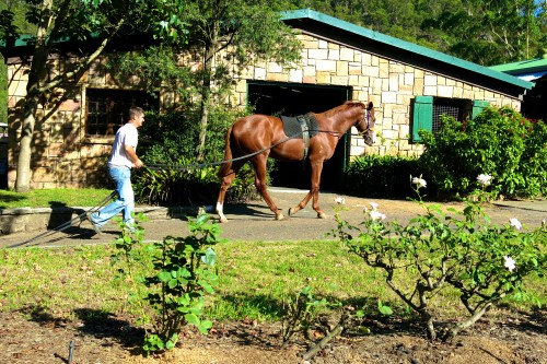 Muskoka Farm Horse breaker Toby Pracey