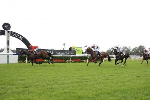 Courtza King Warwick Farm win 250315  (Bradleys)